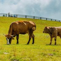 La carne de res sostenible puede ser buena para el medio ambiente