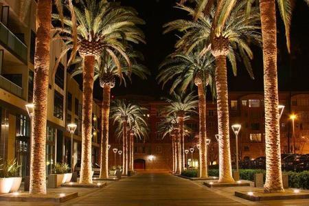1024px San Jose California Palm Tree 2010