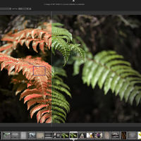 Darktable, la alternativa gratuita a Lightroom, ya está disponible en versión Windows