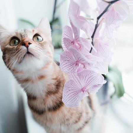 Plantas seguras para las mascotas