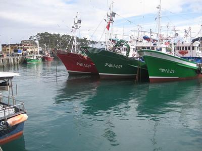 Cada vez más voces contra el veto al atún rojo