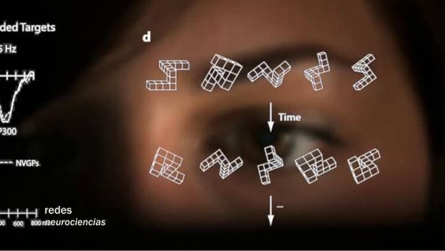 El efecto de los videojuegos en el cerebro