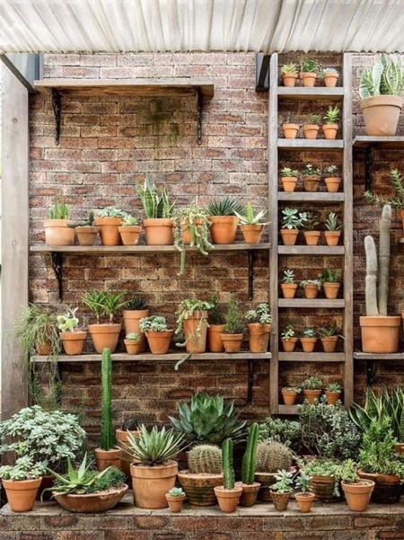 Cactus Ladrillovisto