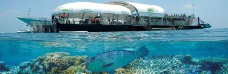 snorkel-hayman
