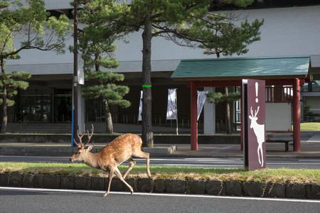 Planet Deer Yoko Ishii 13