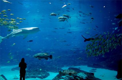 Georgia Aquarium, U.S.A.
