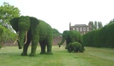 Elefantes en el jardín
