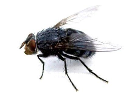 Yonshi & Son, adopta una mosca como animal de compañía