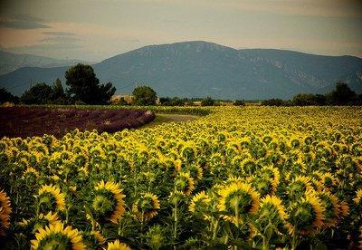 La necesidad de proteger las variedades vegetales