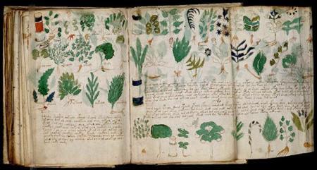 800px-voynich_manuscript_178.jpg