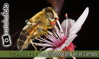 Vuelve la primavera: 10 consejos para hacer macrofotografía en el campo