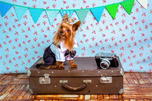 ¿Es posible viajar con tu perro y no morir en el intento?