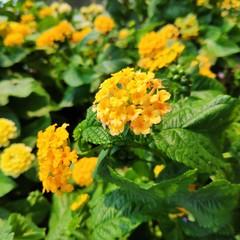 Foto 5 de 24 de la galería fotografia-pocophone-f1 en Xataka
