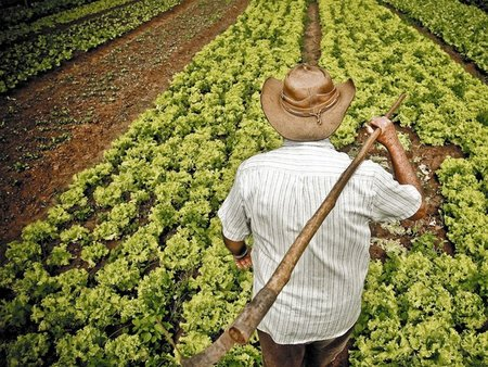 Las CAS o comunidades de agricultura sostenible
