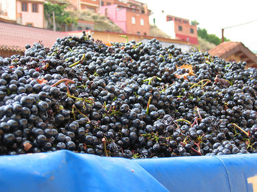 Enoturismo en España: D.O.Ca. Rioja