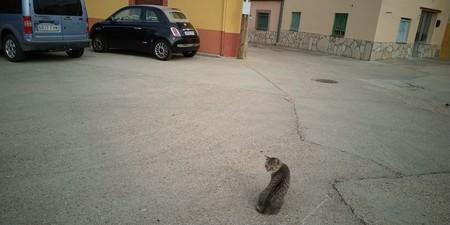 gato pueblo coches