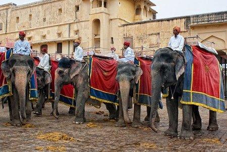 India: A lomos de elefante hasta el Amber Fort
