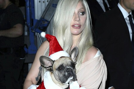 Someone Shot Lady Gagas Dog Walker And Took Her T 2 801 1614377705 7 Dblbig