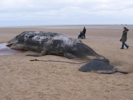 Sperm Whale 904349 1280