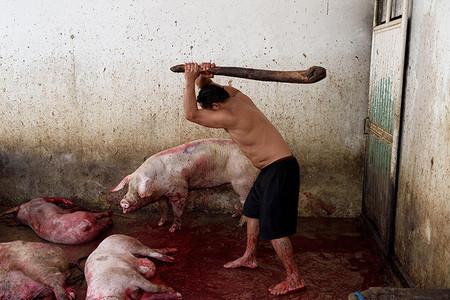 Cerdo Apaleado Rastro Matadero Mexico