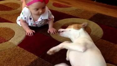 ¡Adorables! El perro que enseña al bebé a gatear