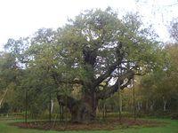 El Bosque de Sherwood para quienes sueñan con ser Robin Hood