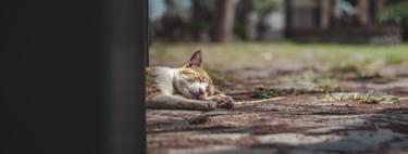 Después de comer, ¿mejor echar la siesta o dar un paseo? La ciencia nos da la respuesta