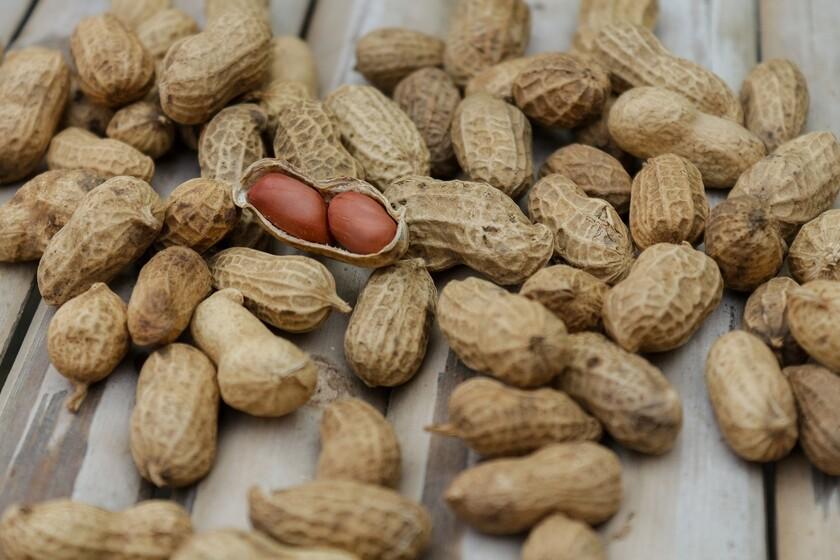 Los casos de alergia a los cacahuates han disminuido gracias a la recomendación sobre su introducción temprana