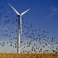 'Los aerogeneradores matan pájaros', la excusa de Trump para atacar la energía eólica y apoyar el carbón