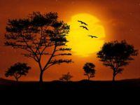 La extrema delicadeza de un árbol