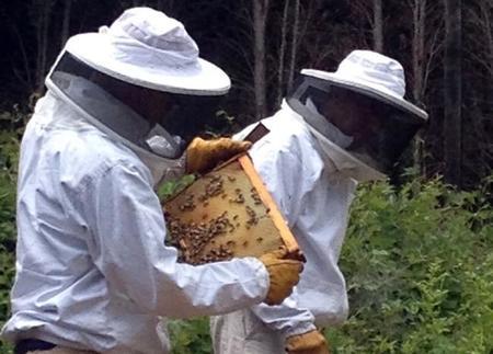 Así conviven 85.000 abejas felices y los empleados de una fábrica de Toyota