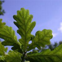 Los bancos de semillas no son la panacea: no pueden preservar el 36 % de las plantas