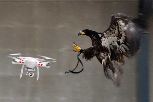 Eagle Drone Police