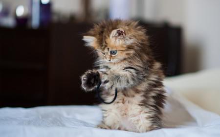 23 gifs para celebrar el día internacional del gato