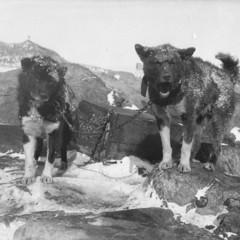 Foto 15 de 18 de la galería las-primeras-fotografias-de-la-antartida en Xataka Foto