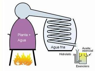 La destilación al vapor de agua