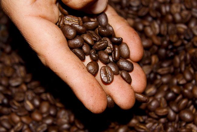 El Black Ivory el café más caro del mundo
