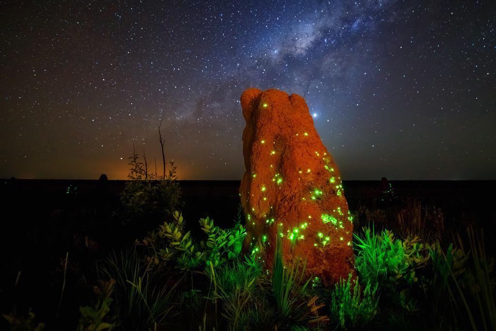 Bioluminescence De Marcio Cabral De Brasilia Brasil