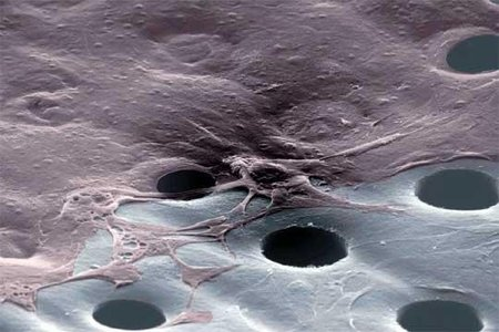 Nanotecnología para combatir el cáncer