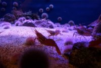 Aceite de krill para mantenernos más jóvenes
