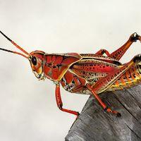 """Comer insectos podría ser el futuro de una alimentación """"sin carne"""": Barclays"""