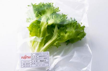 Fresas de Sharp o lechugas de Fujitsu, cultivos en fábricas en desuso