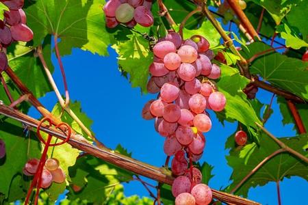 Grapes 3633375 1920