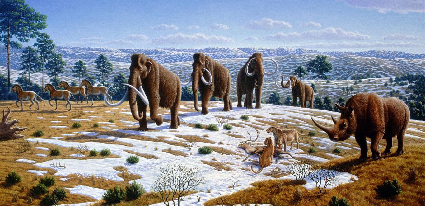 Las colecciones de fósiles de grandes mamíferos tienen 'sesgo de género', y los paleontólogos tratan de comprender la razón
