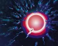 Algunos lubricantes íntimos alteran la calidad del esperma
