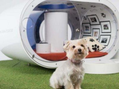 Dream Doghouse, la casa que Samsung considera que se merece tu perro cuesta 27.000 euros