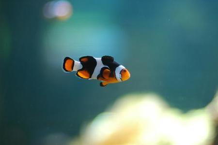 Hotel para peces en Holanda