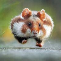 La fauna más simpática: estos son los ganadores de los Comedy Wildlife Photography Awards