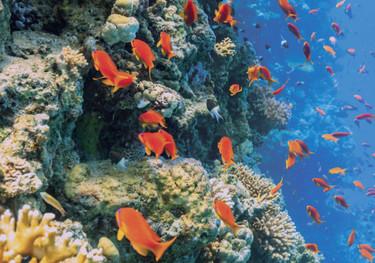Los cuidados solares Eau Thermale Avène protegen la piel y respetan los océanos