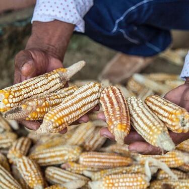 México planea importar maíz para bajar el precio de la tortilla